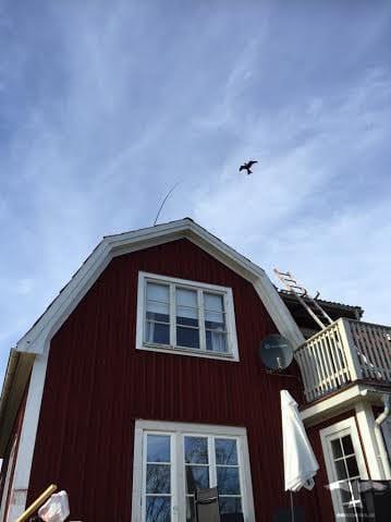 Flygande fågelskrämma på spö monterad på skorsten på hustak
