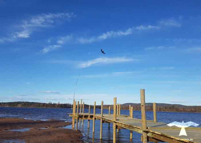 Fågelskrämma monterad på brygga vid Leksands strand.