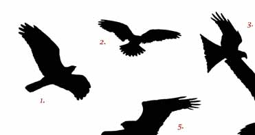Spanish Raptor Silhouette Competition