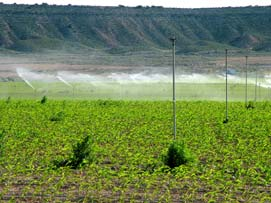 Irrigating the Monegros drylands