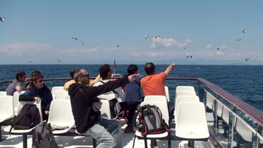 Seawatching off the Mediterranean coast