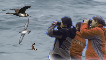 Observació d'ocells marins amb vaixell