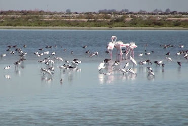 A flock of water birds or a birding bonanza?