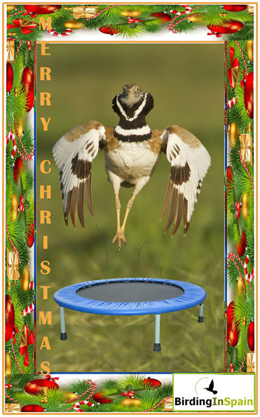 Merry Christmas from Birding In Spain