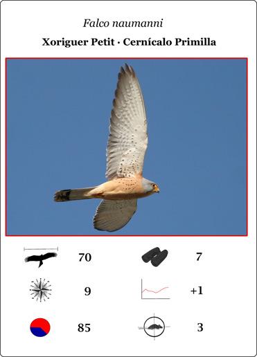 The Lesser Kestrel card from La Sabina's Raptor game