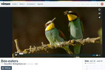 Beautiful Bee-eater video taken from bird photo hide in Catalonia.