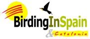 Birding In Spain