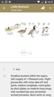 Collins Bird Guide Little Bustard