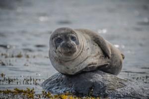 pascal-mauerhofer-sealblog