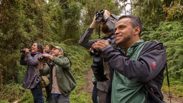 Can birdwatching really improve our mental health? The science says yes