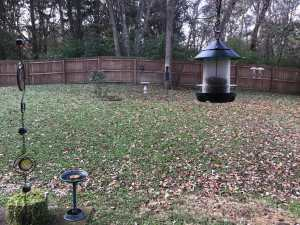 sunflower chip feeder