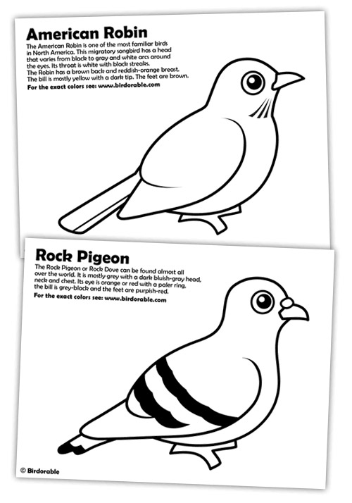 red robin coloring pages cooloring com