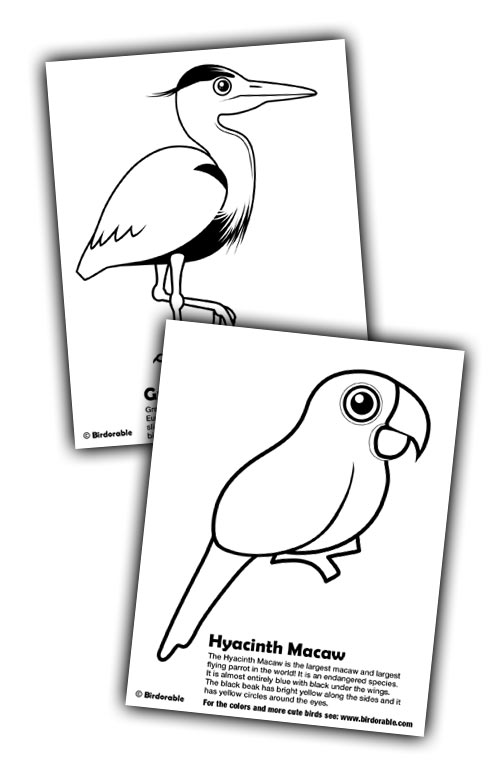 new coloring pages great blue heron grey heron and hyacinth