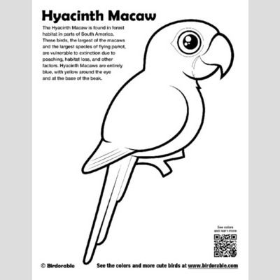 hyacinth macaw coloring page lt fun free downloads amp activity pages