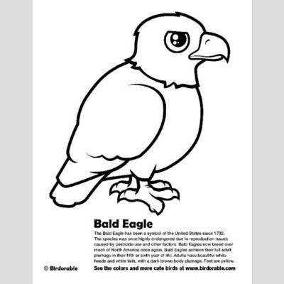 bald eagle coloring page lt fun free downloads amp activity pages