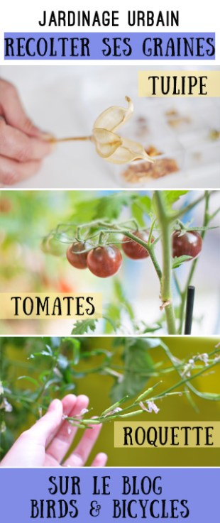 Récolter des graines sur son balcon! Astuces pour se lancer lorsqu'on est jardinier amateur.