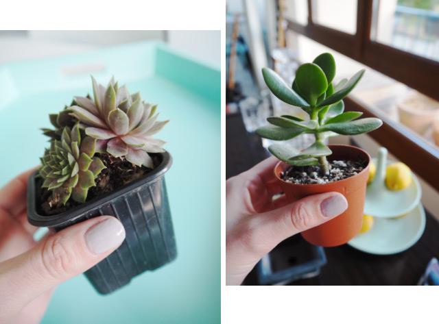 Mes plantes grasses - Une touche verte dans l'appartement