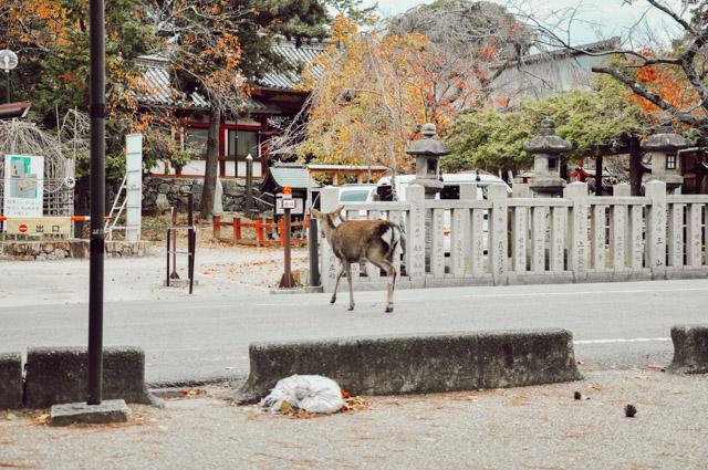 Les daims de Nara au Japon - Blog Birds & Bicycles