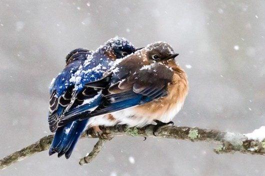 Image result for migrating birds in winter