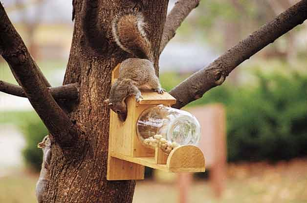 How To Make A Squirrel Feeder With A Gallon Jar