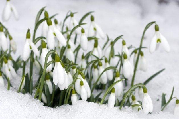 Top 10 Winter Plants Gardening Basics Birds Amp Blooms