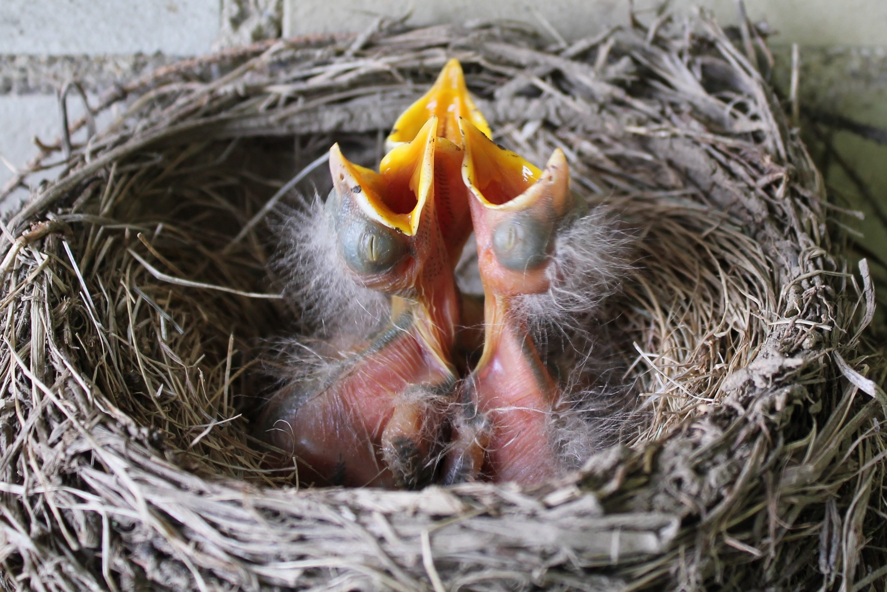 Springtime Brings Baby Birds Birds And Blooms