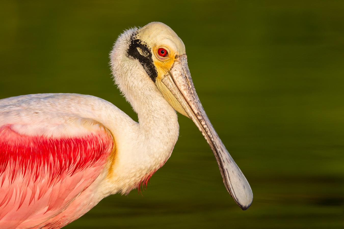 https://i2.wp.com/www.birdsasart-blog.com/baa/wp-content/gallery/contest/v572vymzdudojyweoxdqzdqmyqsjdevdyjessob5zzy2dexyesqvqe5vyz5v2y7qddoybr7x.jpg