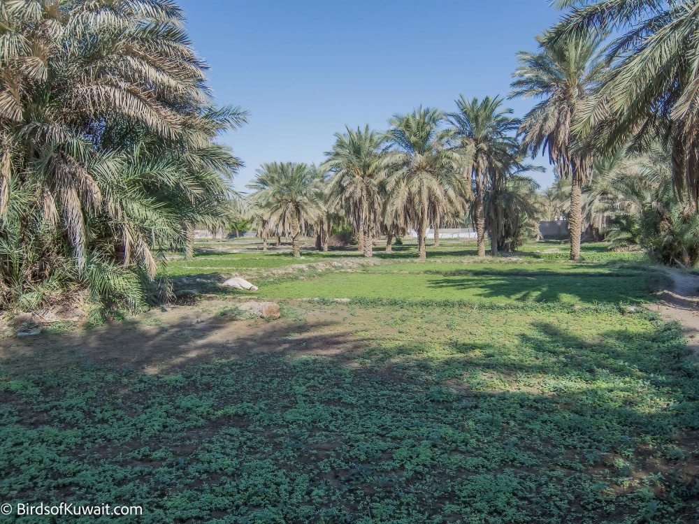 Jahra Traditional Farms