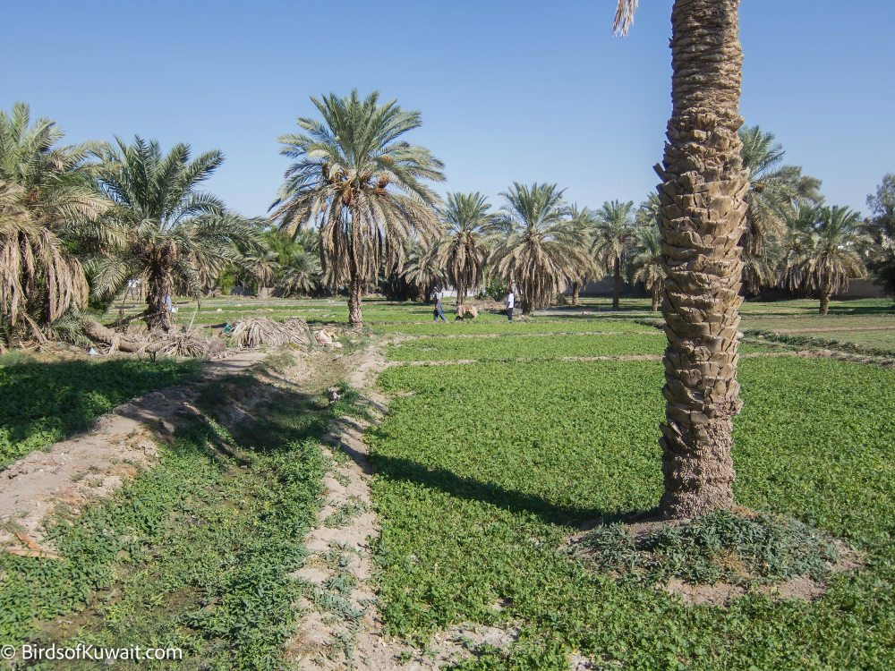 Inside Jahra Tradional Farms