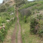 Jersey N Coast Cliff Path, June 2010. Photo by HGYoung