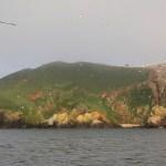 Rouzic island - 7 îles archipelago. Photo by Régis Perdriat