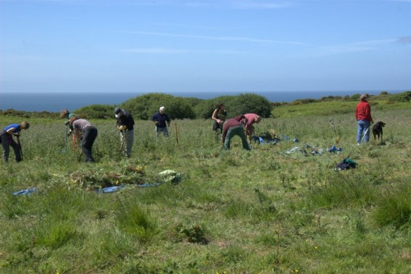 Vounteers at Noirmont. Photo by National Trust for Jersey