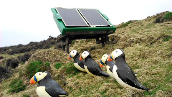 Ramsey Island's decoys and sound system. Photo by Greg Morgan