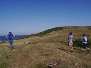 Coastal farmland grazed by Longhorn cattle to improve chough feeding sites. Photo by Liz Corry