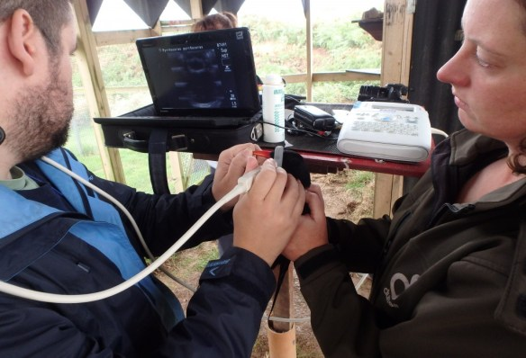 Durrell vet, Alberto Barbon, performing an ultrasound on a Jean's eye. Photo by Harriet Clark