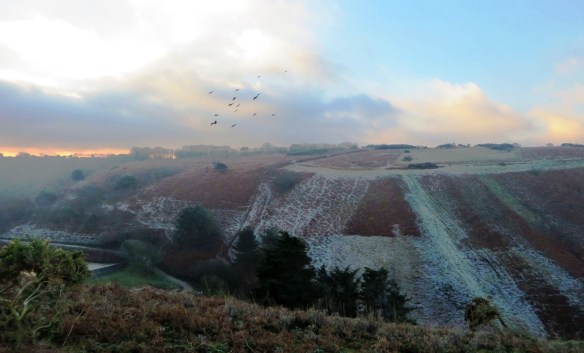 The flock flying over a frosty Mourier Valley. Photo by Will Campbell