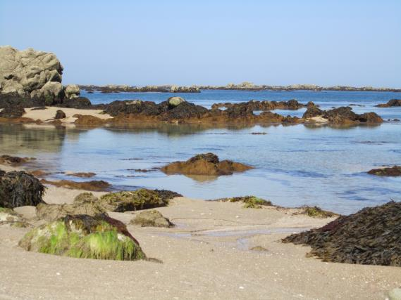 the-intertidal-environment-at-les-minquiers-is-diverse-and-mostly-pristine