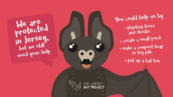 Jersey Bat Project Bat Fact 10