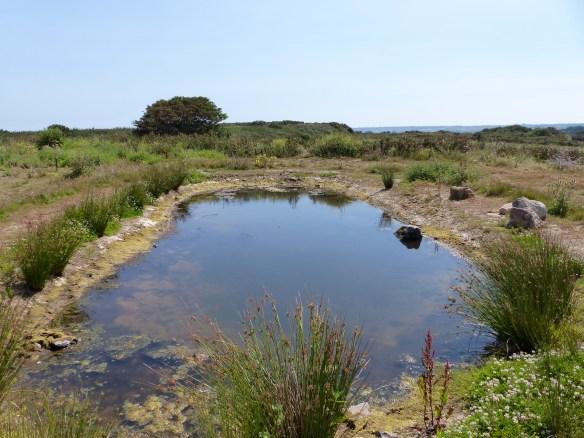 Plemont pond