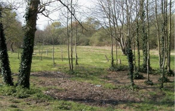 Managed woodland at Grouville Marsh. Photo courtesy of States of Jersey