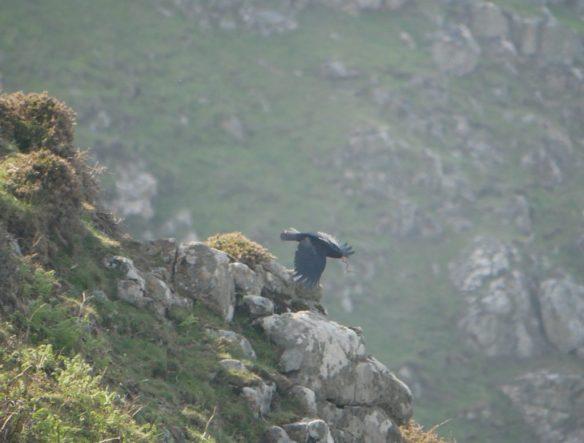 Blog Archives - Birds on the edgeBirds on the edge