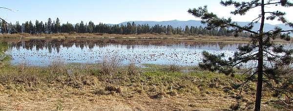 Photo of marsh