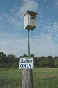 Free Bluebird House Plans   Multiple Designs Bluebird House plans