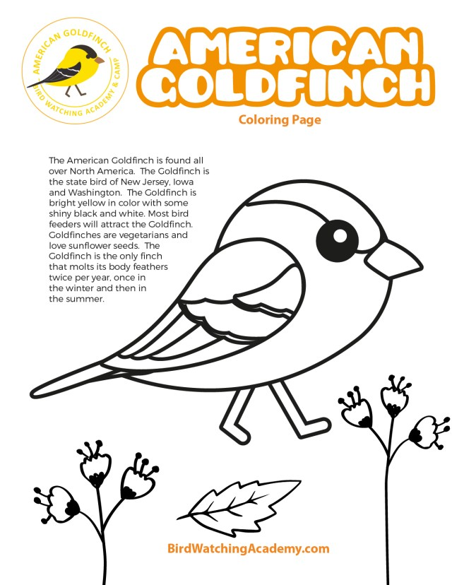 American Goldfinch Coloring Page - Bird Watching Academy