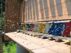 Bienen Imkerei Honig