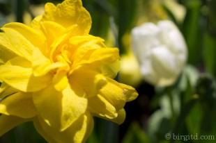 Blüten im Mai-5944