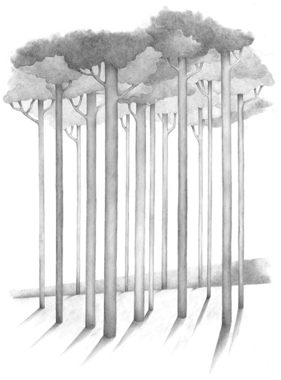 """Das Bild -Sommer- gehört zu dem Zyklus """"Die Suche"""" und zeigt einen Wald mit Laub, streng grafisch gezeichnet"""