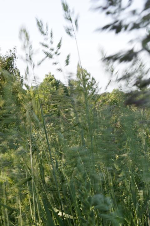 Bild: Sommerwind - Wiese bei Greifenhagen. NIKON D300S - ISO200, f / 5, 1:8 s. DxO Optics Pro 7.0 Expert.
