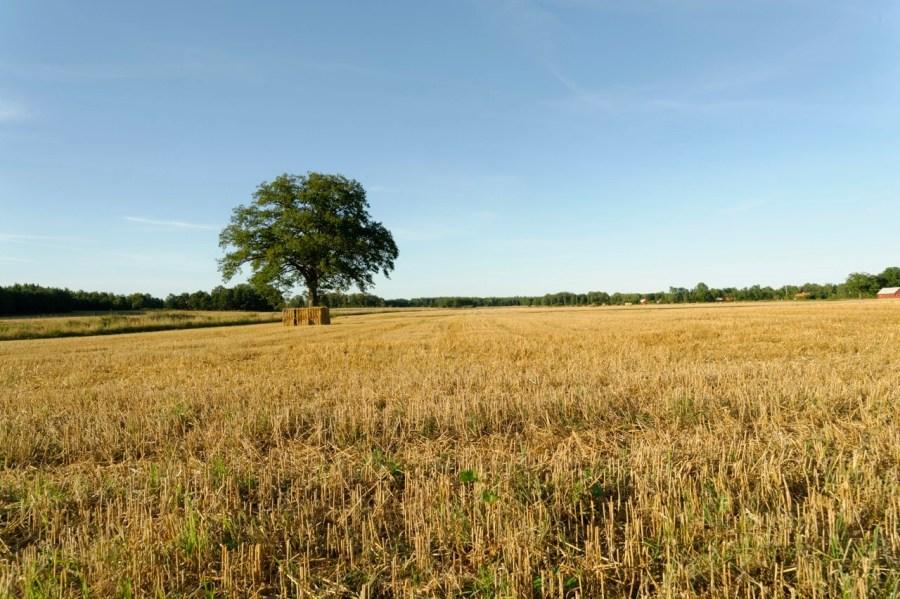 Bild: Småland ist durch weite Felder geprägt, so wie hier bei Hagby südlich von Kalmar. NIKON D700 und AF-S NIKKOR 24-120 mm 1:4G ED VR.