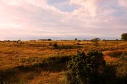 Bild: From a Distance - Abendstimmung am Schloss Borgholm auf der Insel Öland. NIKON D700 und AF-S DX NIKKOR 18-200 mm 1:3.5-5.6G ED VR Ⅱ.